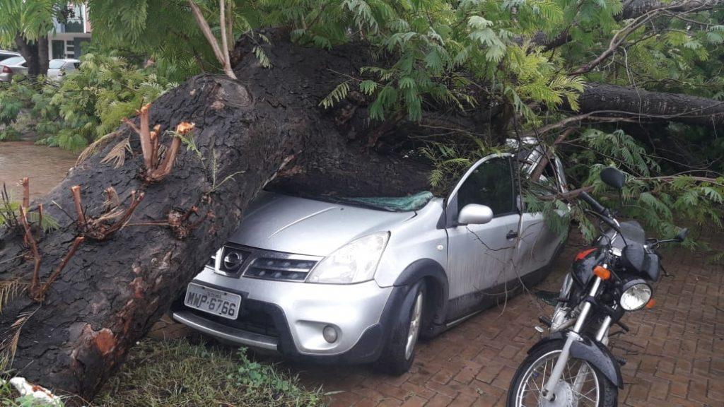 carro amassado por árvore